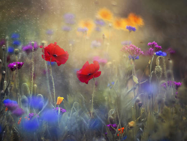 Red Flower Photograph - Monet's Garden I by Magda  Bognar