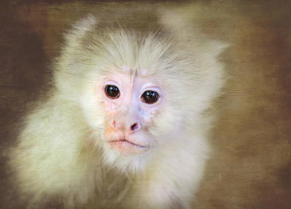 Photograph - Monkey Portrait by Trina  Ansel