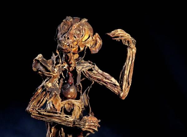 Anatomical Position Wall Art - Photograph - Monkey Anatomy by Patrick Landmann/science Photo Library