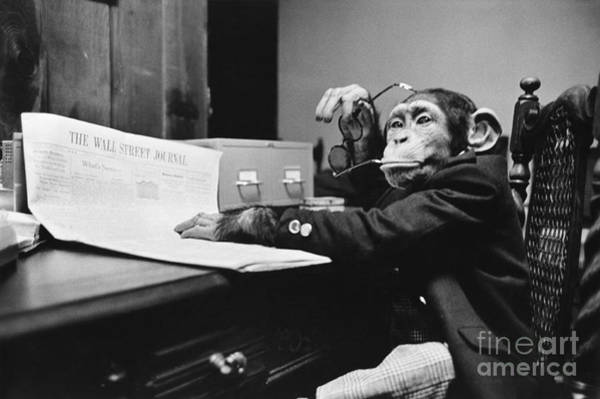 Sentimentality Photograph - Monkey Business by Bruce Buchenholz