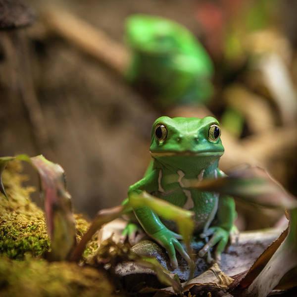 Georgia Photograph - Monkey Frog by C. Fredrickson Photography