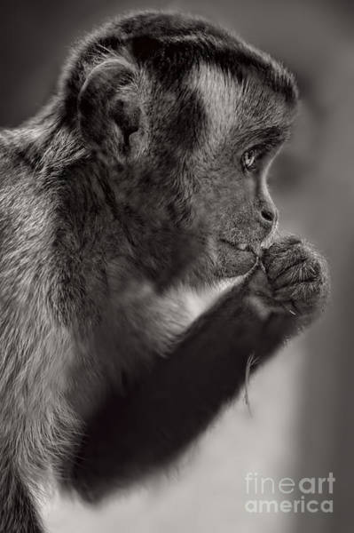 Wall Art - Photograph - Monkey by HD Connelly