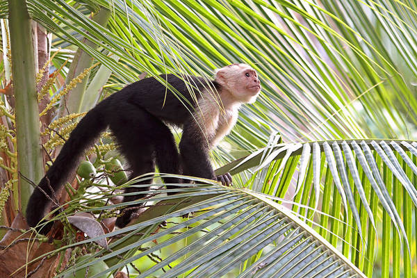 Photograph - Monkey In The Jungle by Peggy Collins