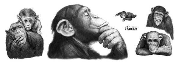 Wall Art - Painting - Monkey Long Drawing Art Poster by Kim Wang