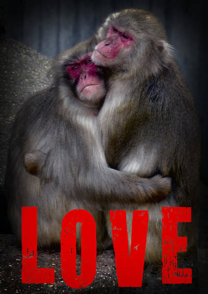 Together Forever Photograph - Monkey Love by Daniel Hagerman