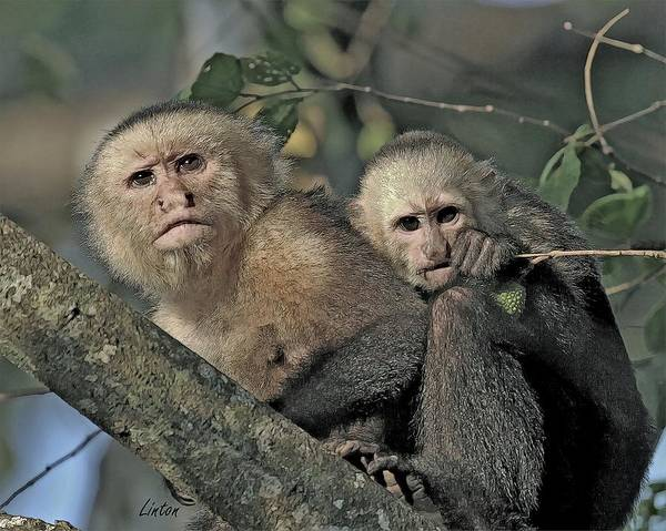 Digital Art - Monkey Mother And Youngster by Larry Linton