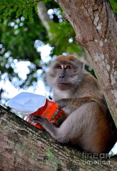 Photograph - Monkey On Tree Eating Cup Noodles by Imran Ahmed