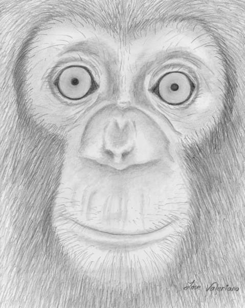 Drawing - Monkey Portrait by M Valeriano