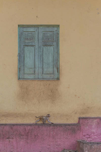 Myanmar Wall Art - Photograph - Monkey Stroll by Patrick Dessureault