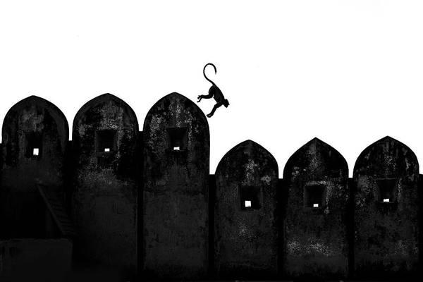 Monkey Wall Art - Photograph - Monkey by Yasemin Bakan