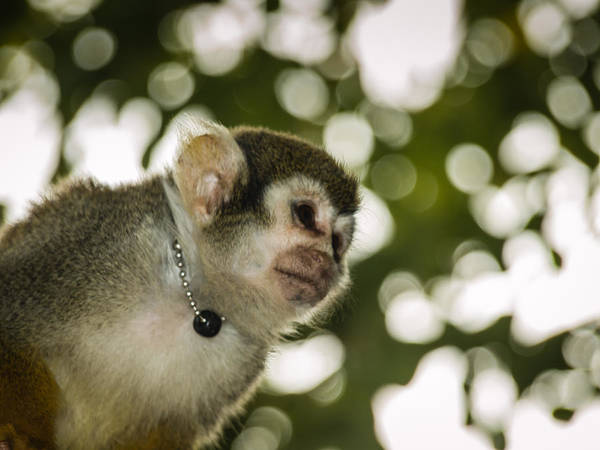 Bokah Photograph - Monkeying Around by Richard Brown