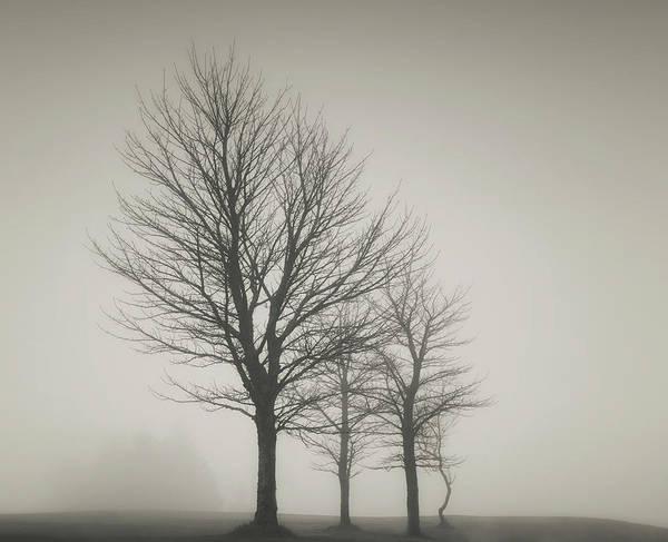Ayrshire Photograph - Mono Trees by Samantha Nicol Art Photography