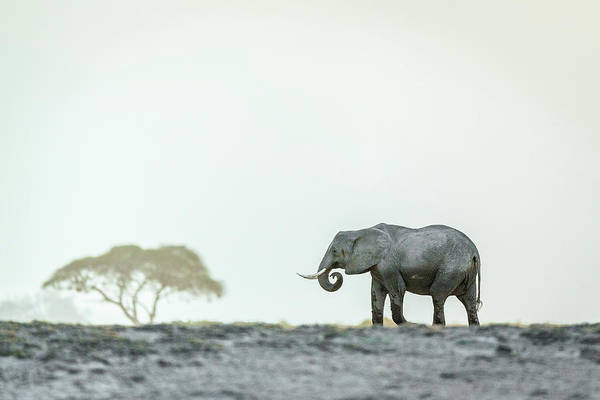 Amboseli Wall Art - Photograph - Monochromatic Color by Jeffrey C. Sink