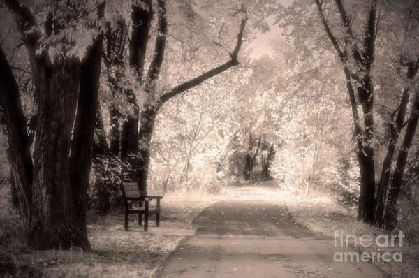 Photograph - Monotone Autumn by Tara Turner