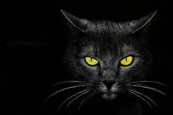 Cat Eyes Wall Art - Photograph - Monster Kill by Davorin Baloh