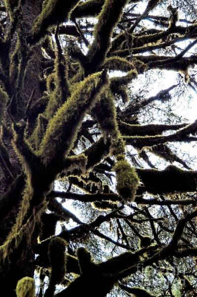 Photograph - Monster Woods by Joseph Yarbrough