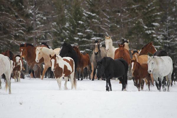 Montana Herd Art Print