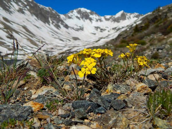 Blue Lakes Colorado Wildflowers Art Print