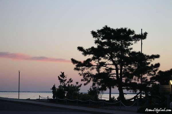 Photograph - Montego's Last Pine by Robert Banach