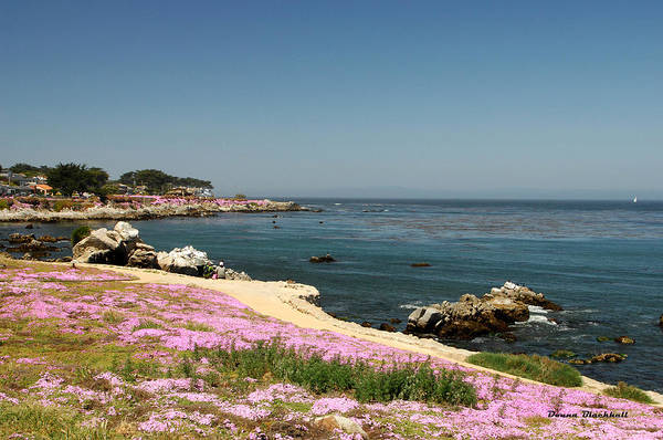 Monterey Bay Photograph - Monterey Bay by Donna Blackhall