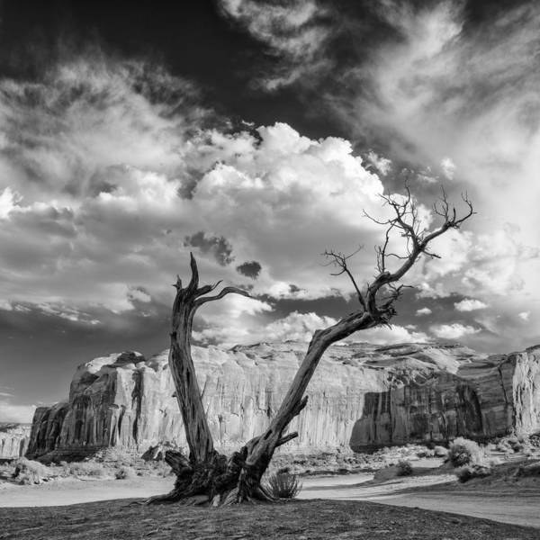 Wall Art - Photograph - Monument Valley Juniper Tree And Mesa by Silvio Ligutti