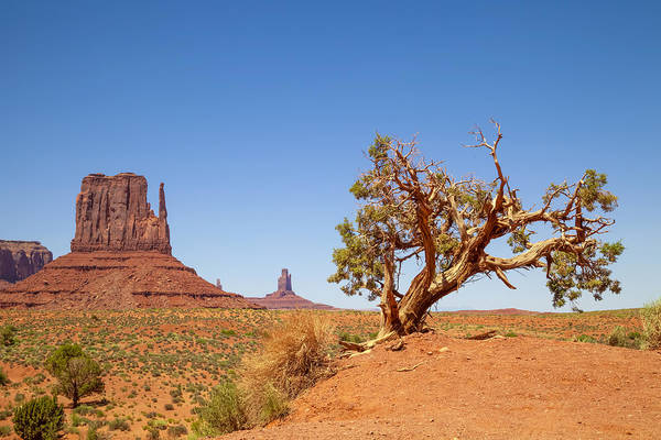 Geologic Formation Photograph - Monument Valley West Mitten Butte And Tree by Melanie Viola