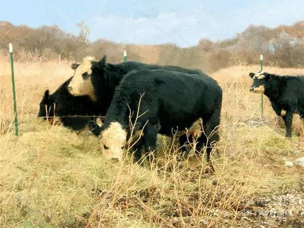 Painting - Moo Cow Munch by RC DeWinter