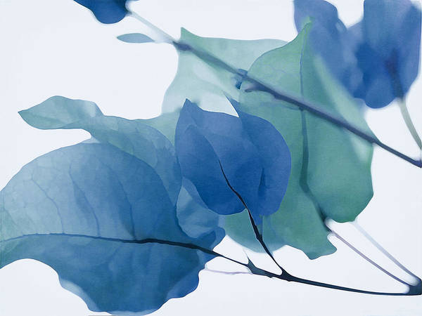Photograph - Moody Blues Bougainvillea by Fraida Gutovich