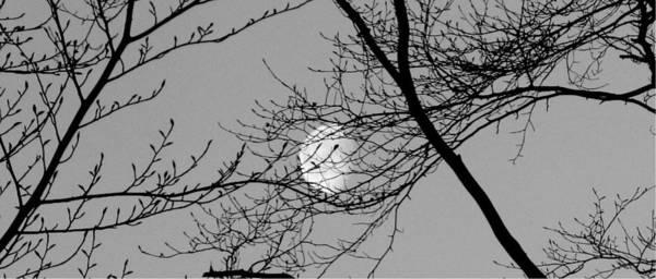 Photograph - Moon 11-004a by Mario MJ Perron