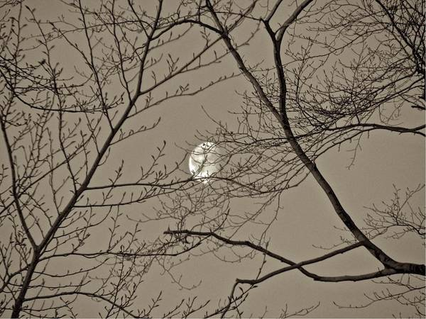 Photograph - Moon 12-002a by Mario MJ Perron