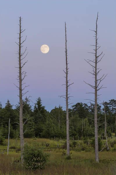 Photograph - Moon Before Nightfall by Denise Bush