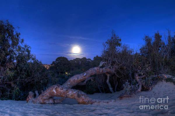 Photograph - Moon Branch by Mathias