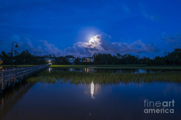 Photograph - Moon Dance by Dale Powell