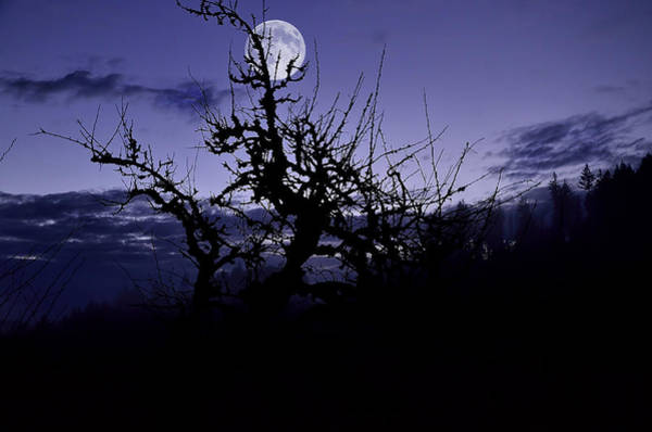 Ivanhoe Photograph - Moon Glow by Todd Sarah Ivanhoe