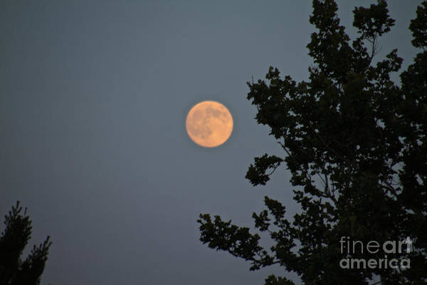 Photograph - Moon Glow by William Norton
