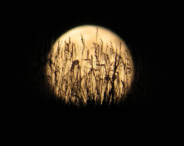 Wall Art - Photograph - Moon Grass by Dawn Key