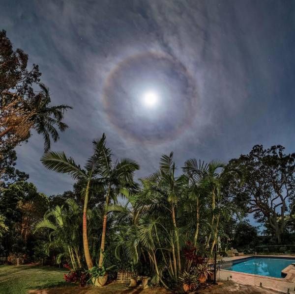 Halo Photograph - Moon Halo Above Palm Trees by Babak Tafreshi/science Photo Library