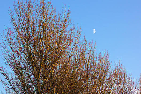 Photograph - Moon In The Trees by Jeremy Hayden