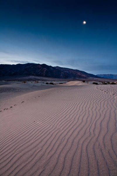 Death Valley Photograph - Moon Over Mesquite Flats by Peter Tellone