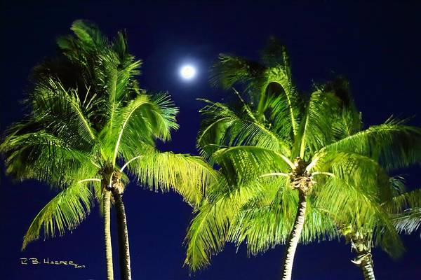 Photograph - Moon Over Palms by R B Harper