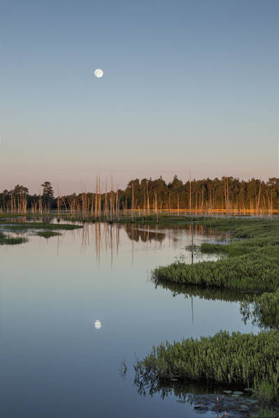 Photograph - Moon Over The Preserve by Denise Bush