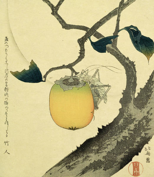 Fruit Trees Wall Art - Drawing - Moon Persimmon And Grasshopper by Katsushika Hokusai