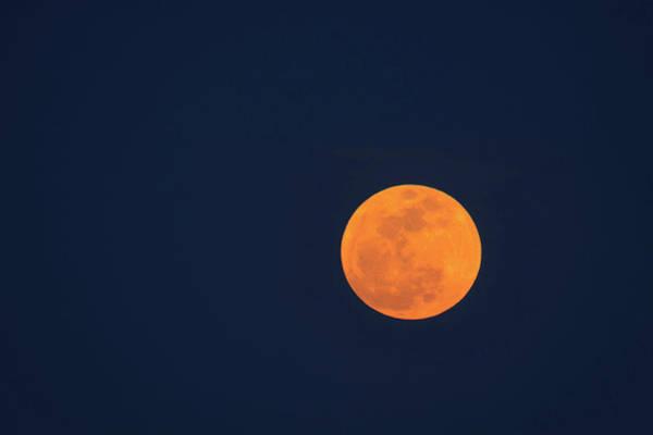 Savannah Photograph - Moon Rise Of Super Moon, Savannah by Danita Delimont