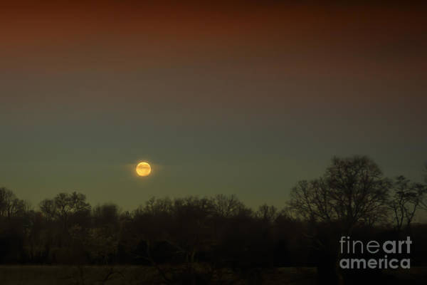 Photograph - Moon Rising by Ronald Lutz