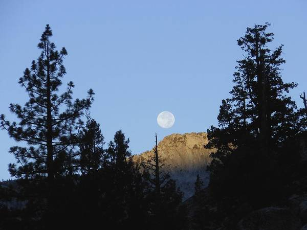 Photograph - Moon Setting In Pines At Sunrise by Don Kreuter