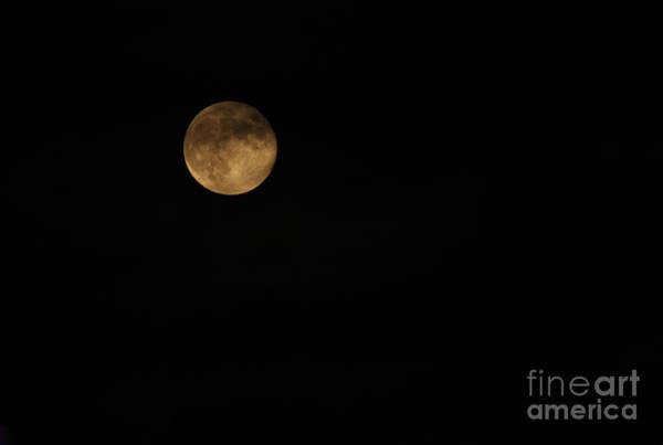 Photograph - Moon Shadows by Karen Adams