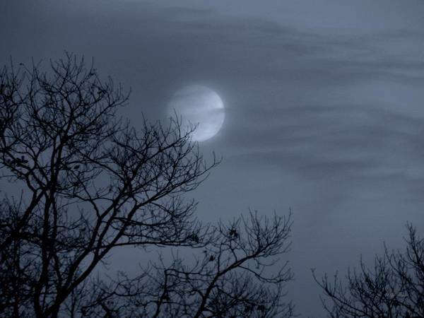 Photograph - Moon Waltz by Wild Thing