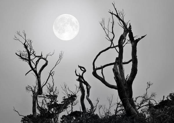 Solidity Photograph - Moon Whisperer by Edwin Verin