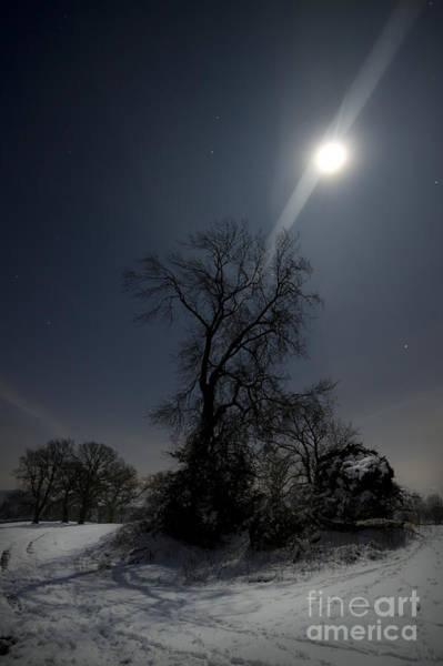 Wall Art - Photograph - Moonlight And The Snow by Angel Ciesniarska