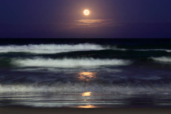 Photograph - Moonlight Beach by Ann  Van Breemen